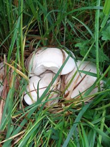 Fotosoutěž jarní houby